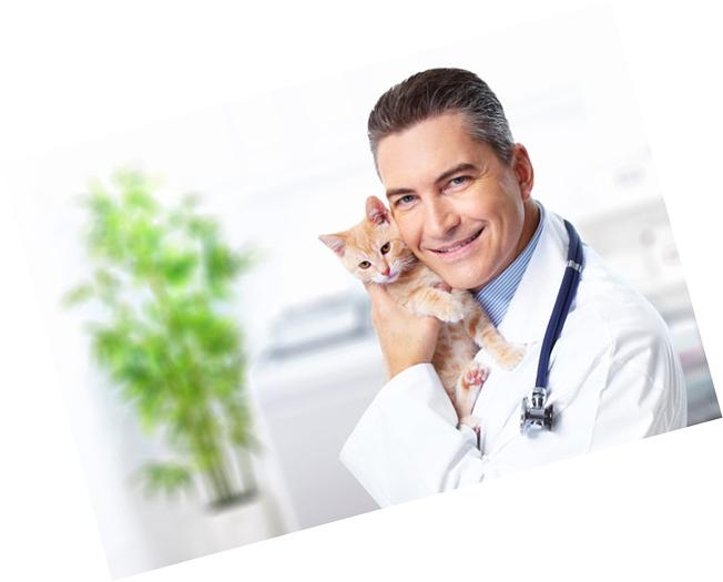 Кастрировать кота и стерилизовать кошку