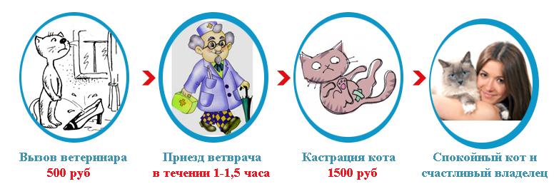 Кастрация кота на дому цена