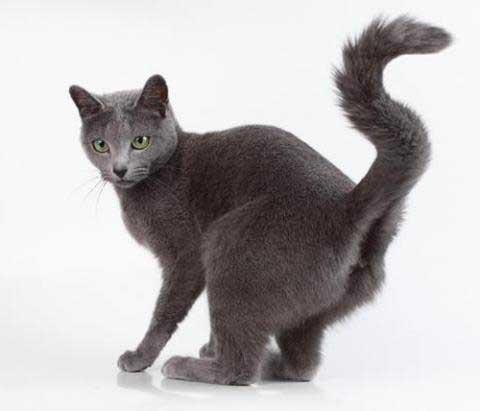 Что делать если кот метит