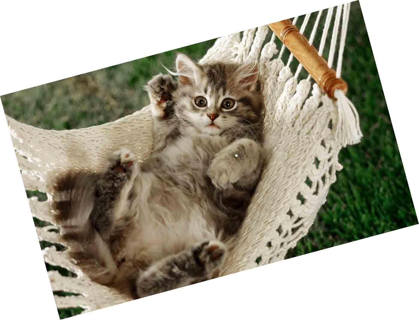 Стоимость кастрации кота на дому в Москве можно узнать по нашему телефону