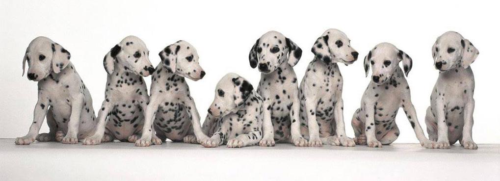 прививки от глистов собакам