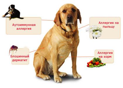 Аллергия у собак, её причины