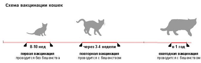 Схема вакцинации котов. Схема прививок для котов
