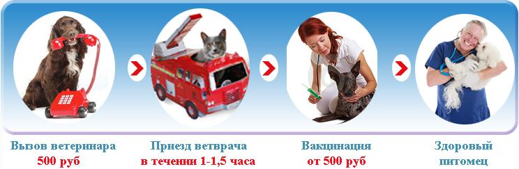 Вакцинация кошек в Москве.