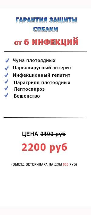 Вакцинация собак в Москве.