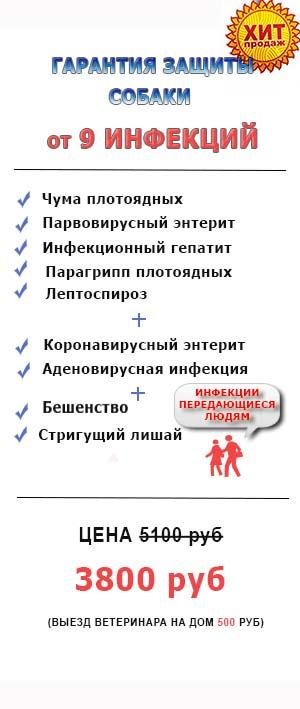 Прививка собак в Москве.