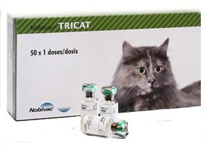 Вакцинация кошек Нобивак Трикет (Nobivac Tricat)