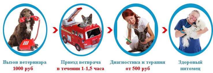 Ветеринар Москва. Вызов ветеринара Москва