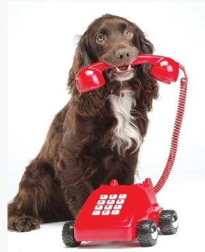 Вызвать ветеринара на дом можно двумя бесплатными способами