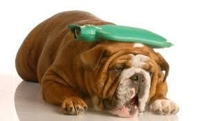 Заболела собака или кошка и Вам необходима помощь Звоните!!!